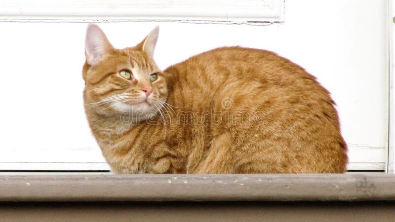 Chat 065 stock image
