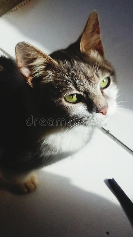 Chat images stock