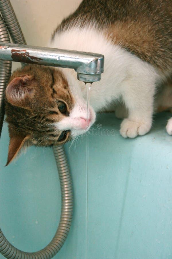 chat altéré photographie stock