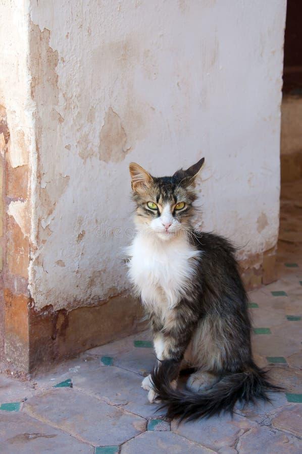 Chat au Maroc pour un vieux mur photographie stock libre de droits