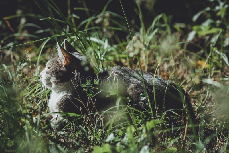 Chat au soleil photos stock