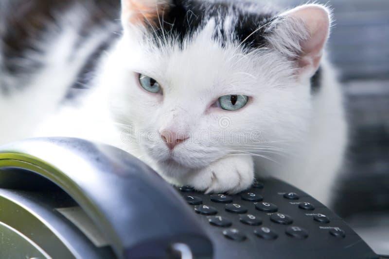 Chat au téléphone ! image stock