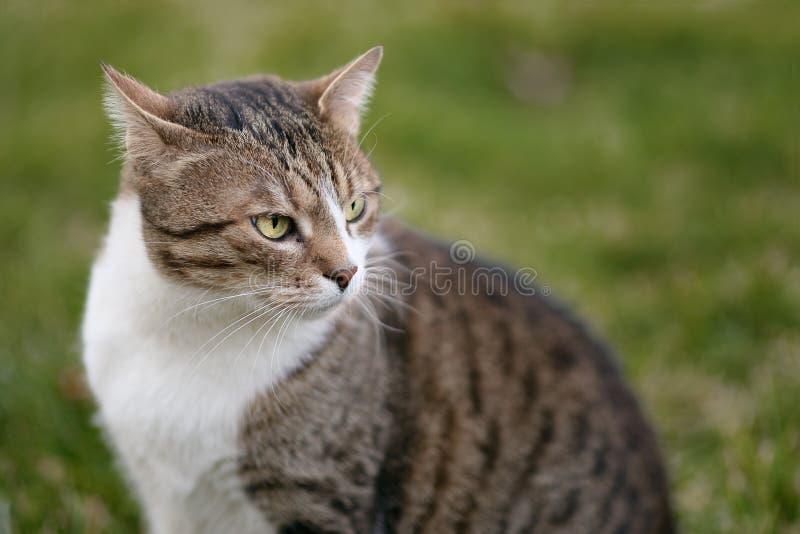Chat avec de beaux yeux image libre de droits