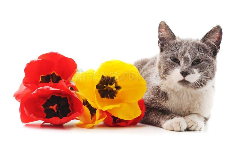 Chat avec des fleurs photos stock