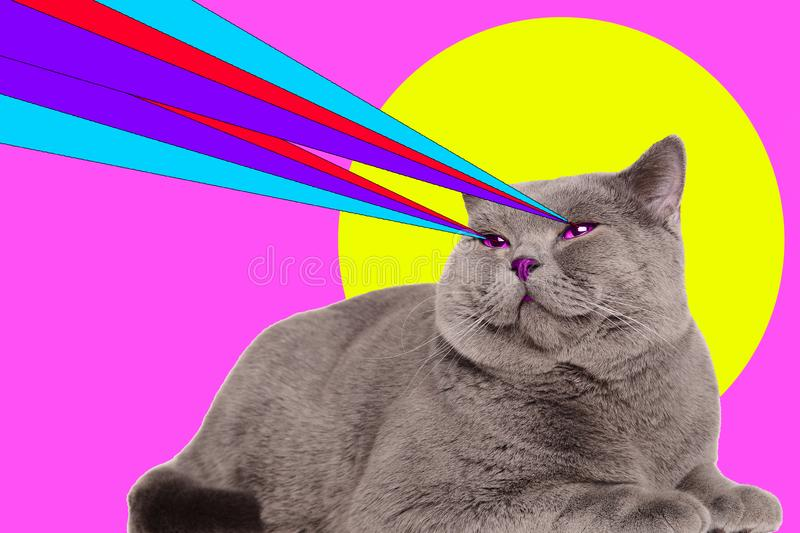 Chat avec des lasers des yeux Concept minimal de mode de collage photo libre de droits