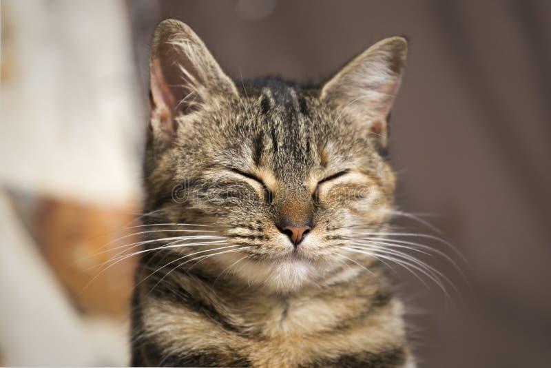 Chat avec des yeux fermés photographie stock libre de droits