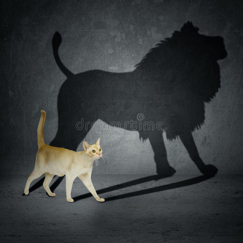 Chat avec l'ombre de lion photographie stock libre de droits