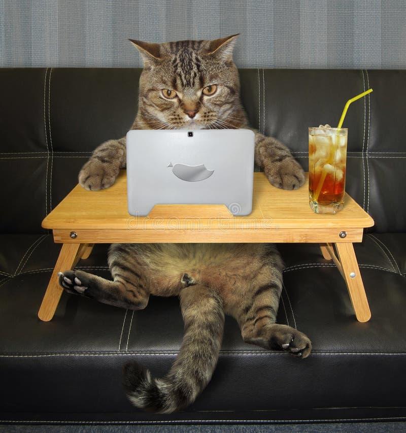 Chat avec l'ordinateur portable sur le sofa photographie stock
