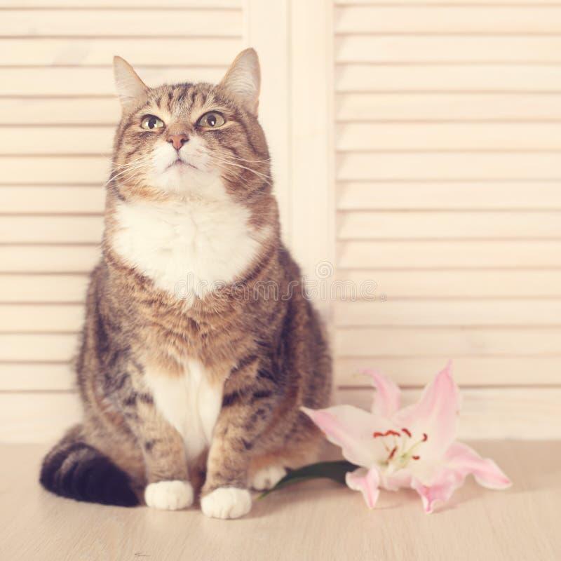 Chat avec la fleur image stock
