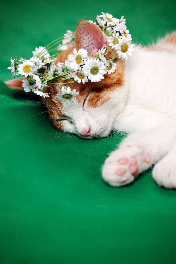 Chat avec la guirlande florale photographie stock libre de droits
