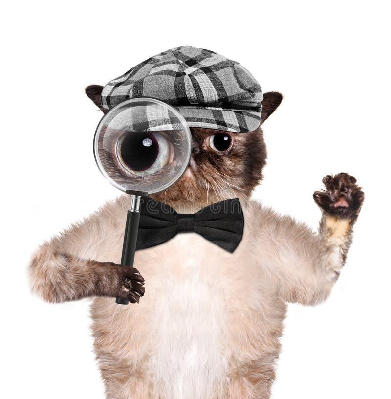 Chat avec la loupe et la recherche image stock