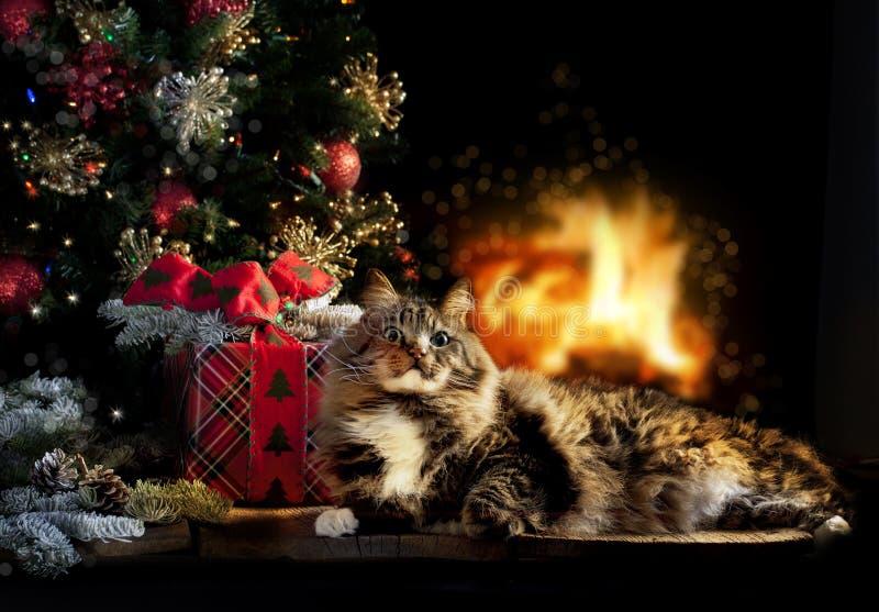 Chat avec le cadeau, l'arbre et le feu de Noël photos libres de droits