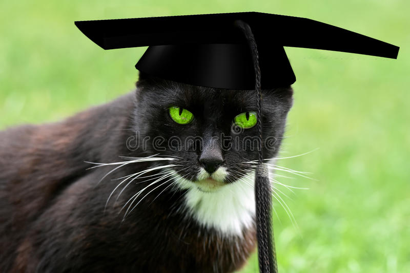 Chat avec le chapeau d'obtention du diplôme photo stock