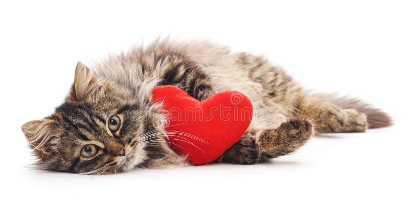 Chat avec le coeur de jouet photos stock