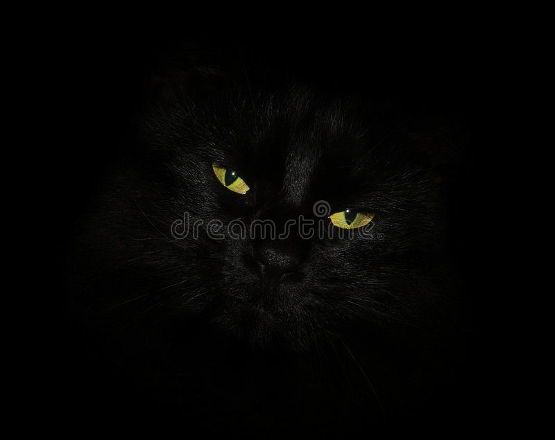 Chat avec les yeux jaunes image libre de droits