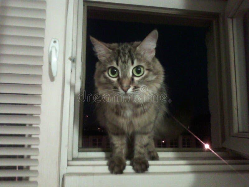 Chat avec les yeux verts photographie stock libre de droits
