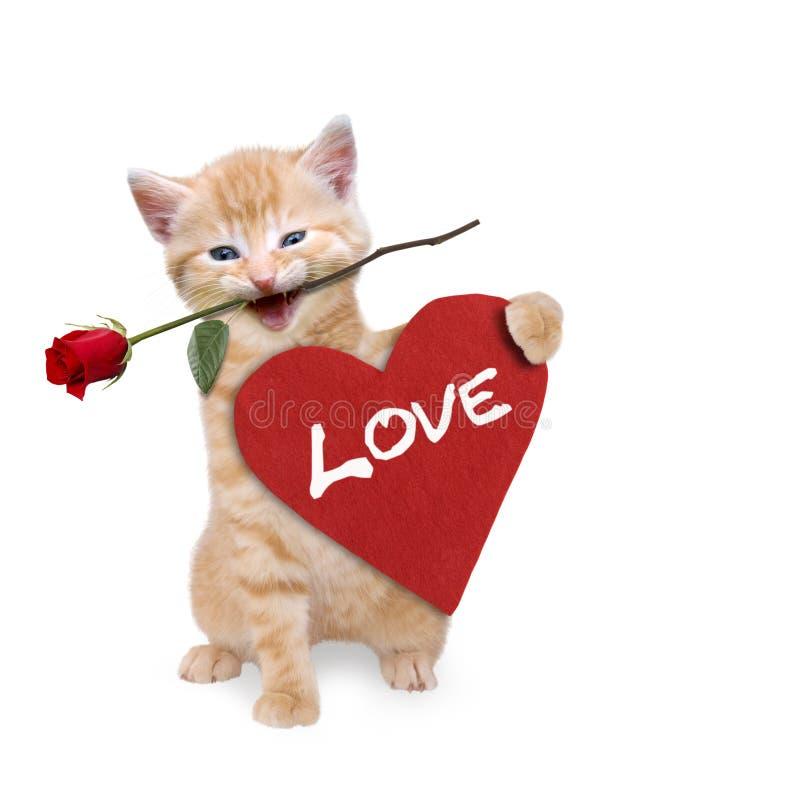 Chat avec une rose rouge et un coeur rouge images stock