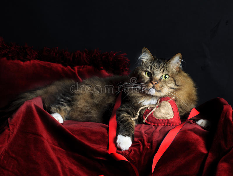 Chat avec Valentine Heart image stock