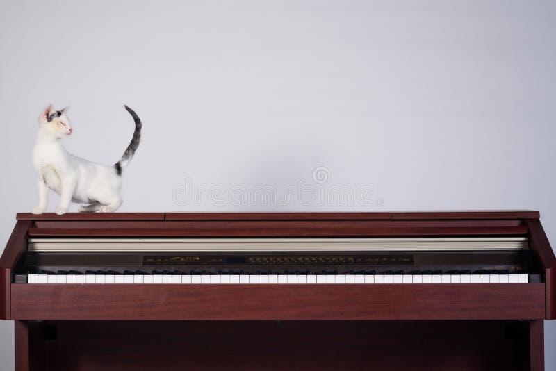 Chat aveugle jouant sur un piano image libre de droits