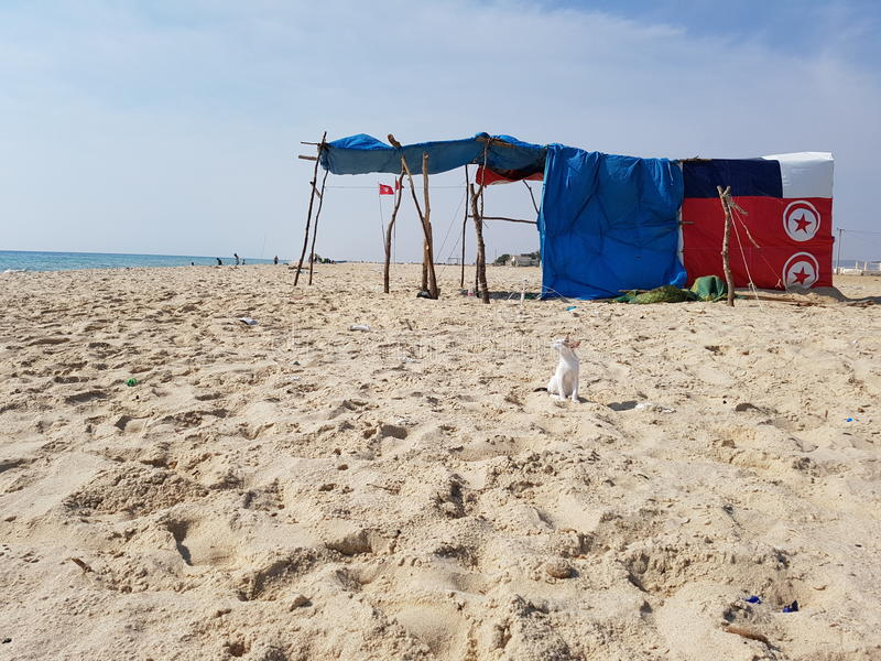 Chat blanc à la plage image libre de droits