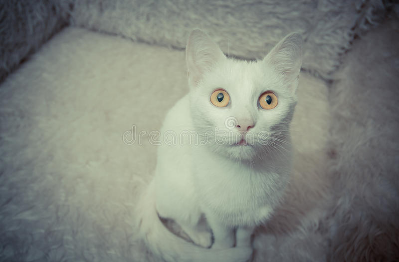 Chat blanc image stock