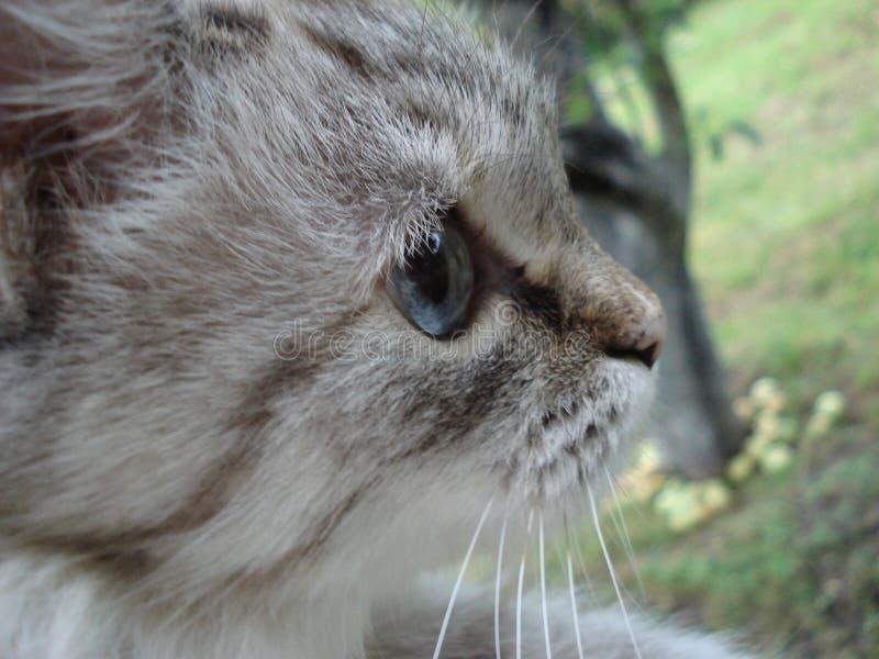 Chat blanc dans le jardin image stock