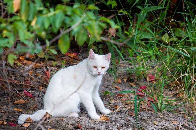 Chat blanc dans le jardin Concept triste d'humeur ou de maladie d'animal familier images stock