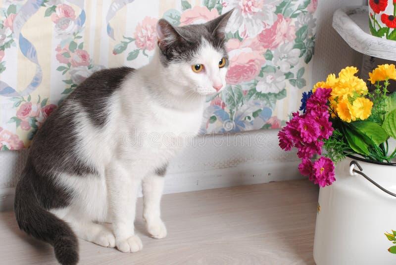 Chat blanc et gris dans un intérieur de vintage avec des fleurs dans des boîtes photos stock