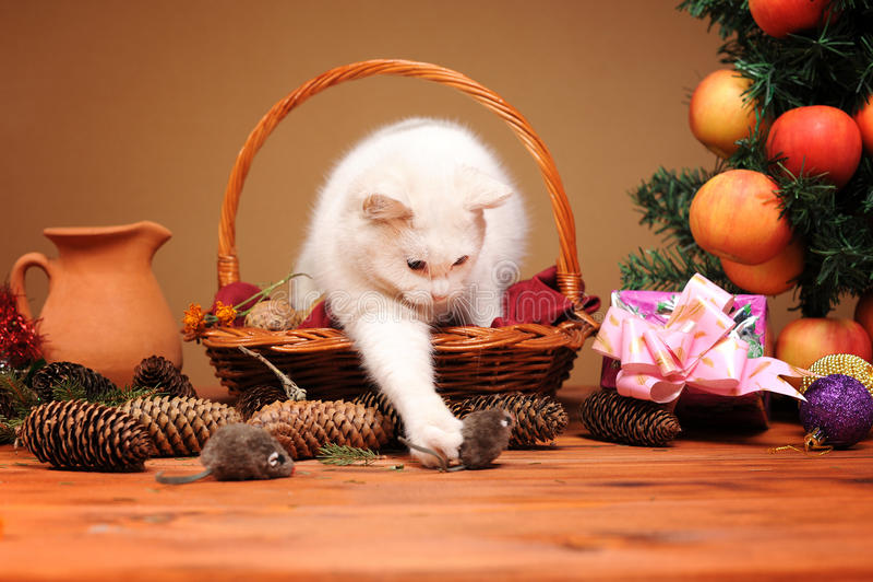 Chat blanc jouant avec des souris d'une peluche images stock