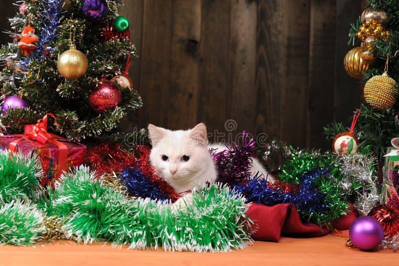chat blanc jouant l 39 arbre de no l photo stock image 47848428. Black Bedroom Furniture Sets. Home Design Ideas