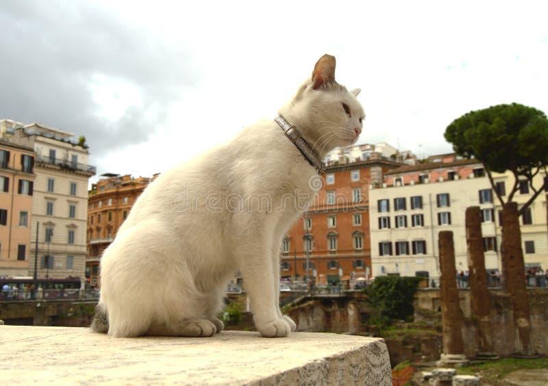 Chat blanc mignon se reposant sur Largo di Torre Argentina carré Dans les ruines romaines antiques sur le site du meurtre de image stock