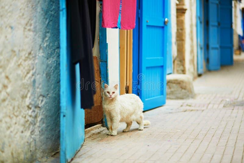 Chat blanc sur une rue en Médina d'Essaouira, Maroc photographie stock