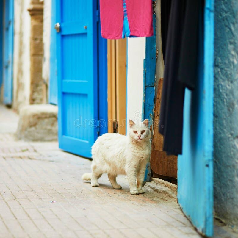 Chat blanc sur une rue en Médina d'Essaouira, Maroc image libre de droits