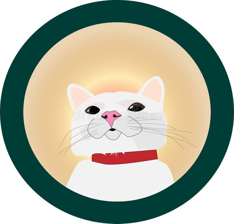 Chat blanc vous recherchant photos libres de droits