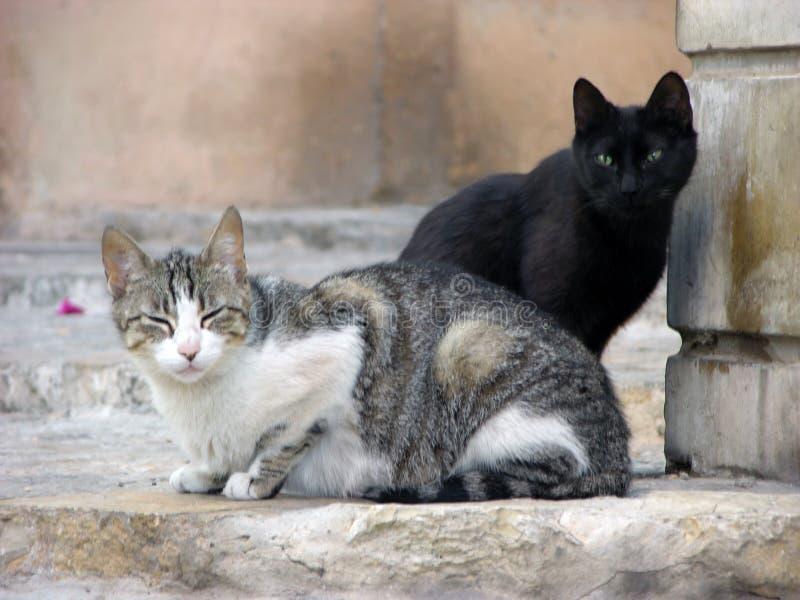 Chat bringé noir et blanc se reposant ensemble sur l'étape images libres de droits
