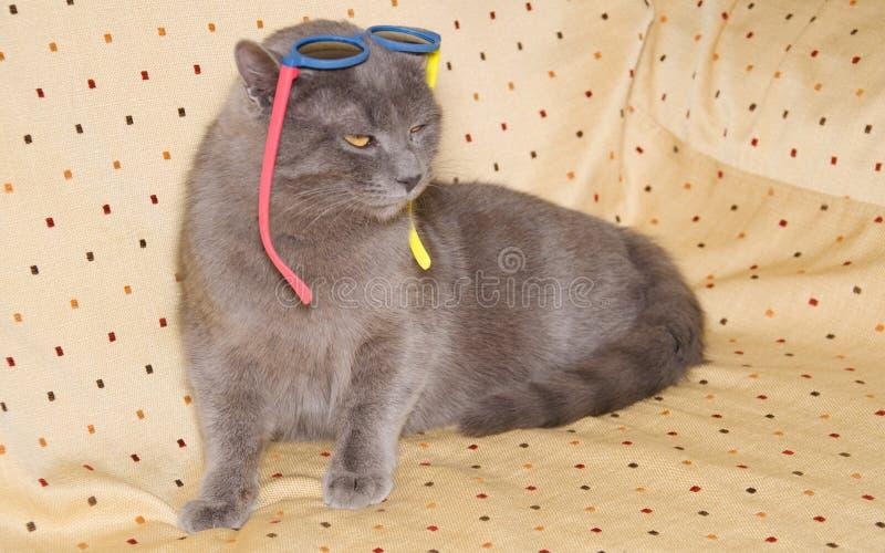 Chat britannique de court-cheveux avec des lunettes de soleil dans la tête photographie stock libre de droits