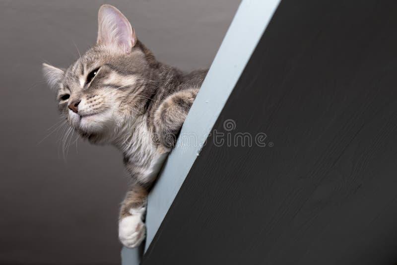 Chat calme dans le zen se reposant sur une étagère images libres de droits