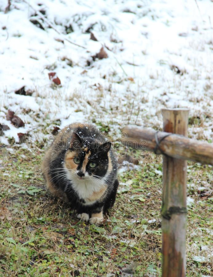 Chat, champ, herbe, neige photos stock