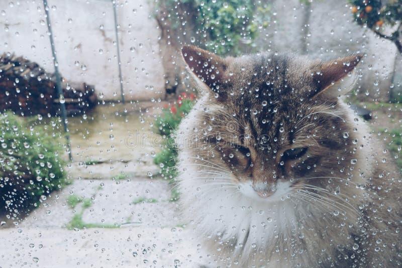 Chat chez Windows avec des baisses de pluie photo libre de droits