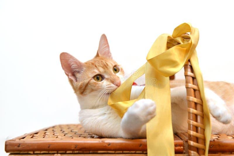 Chat déliant le ruban jaune sur un panier photo libre de droits