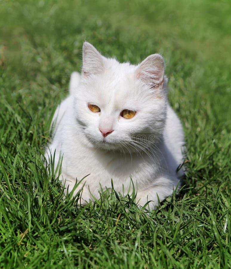 Chat détendant dans l'herbe image stock