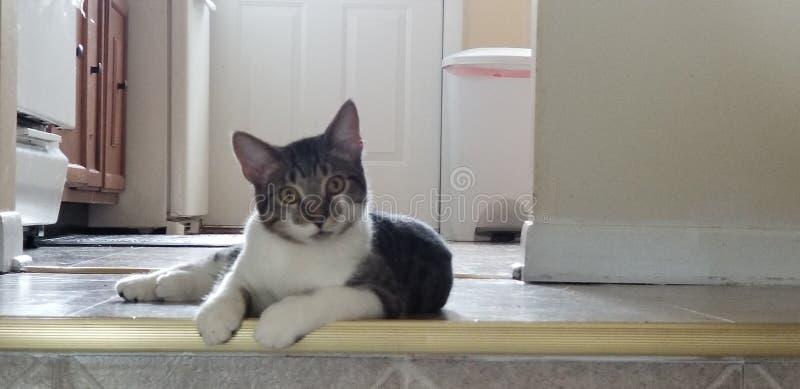 Chat détendant les yeux lumineux paresseux mignons image stock