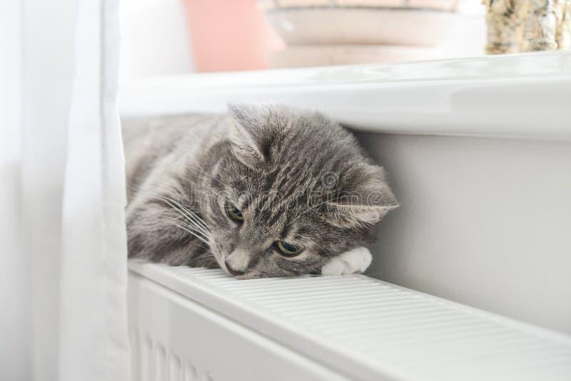 Chat détendant sur le radiateur chaud photo libre de droits