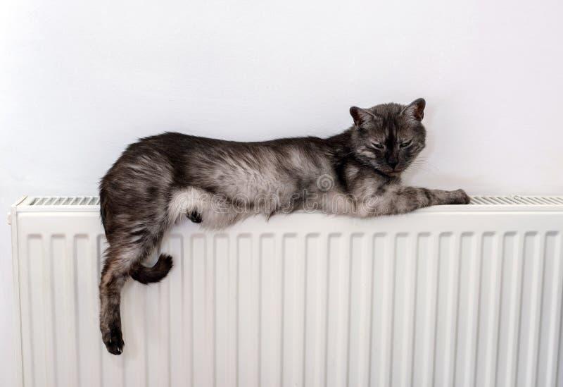 Chat détendant sur un radiateur chaud image libre de droits