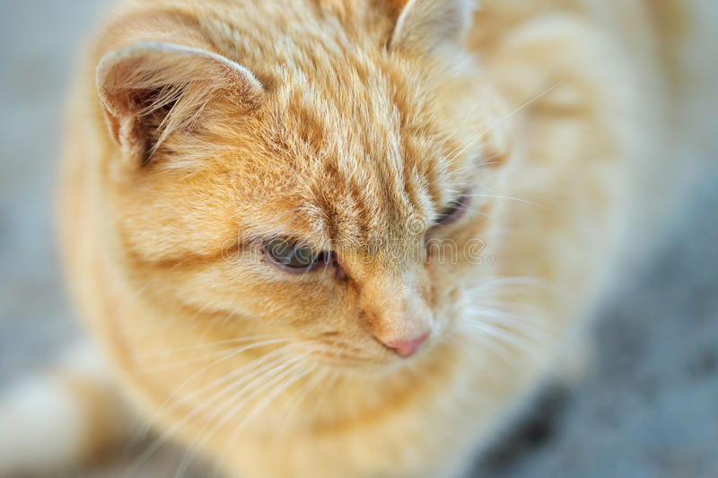 Chat d'animal domestique image stock
