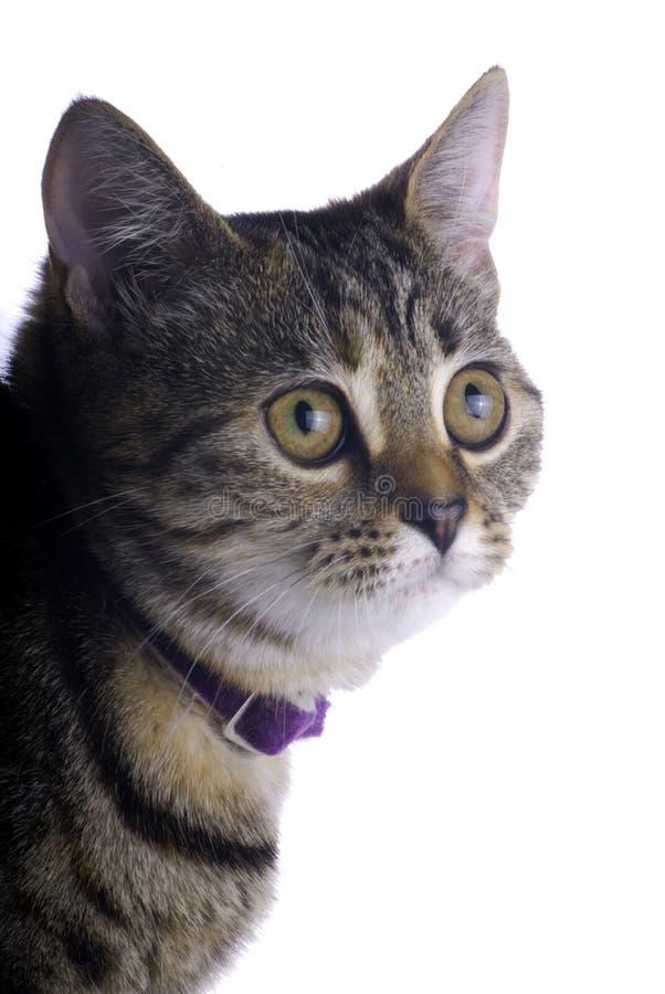 Chat d'animal familier photographie stock libre de droits