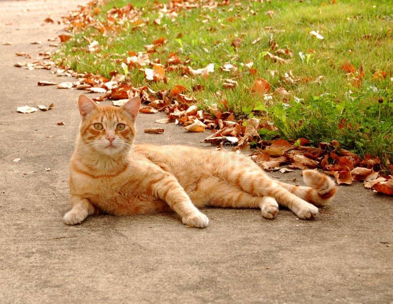 Chat d'automne photo libre de droits