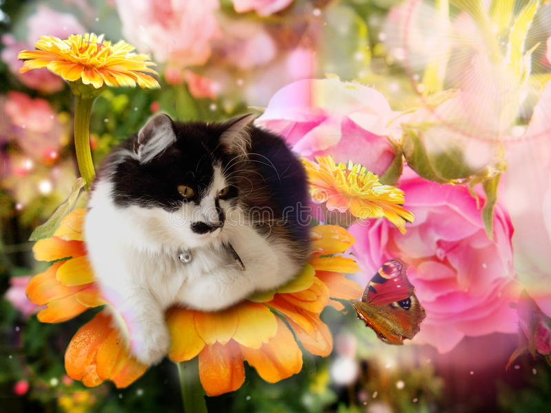 Chat d'imagination sur la fleur avec le papillon photo libre de droits