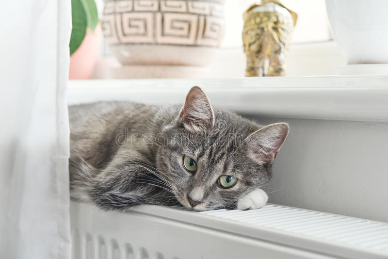 Chat d?tendant sur le radiateur chaud images stock