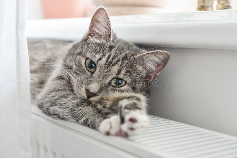 Chat d?tendant sur le radiateur chaud image stock